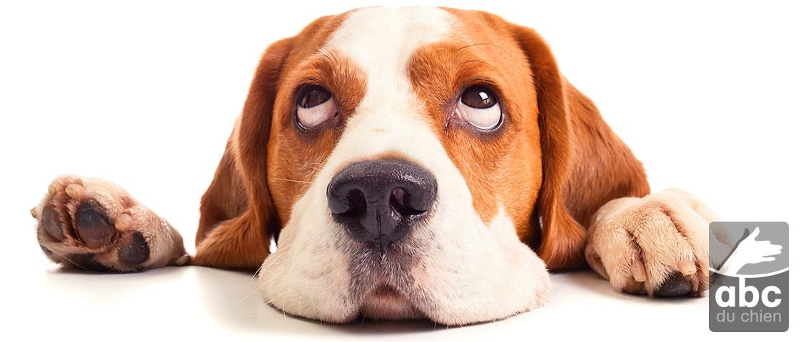 Expert en comportement canin.