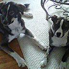 Jack et Tucker