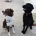 Mika et Loukoum