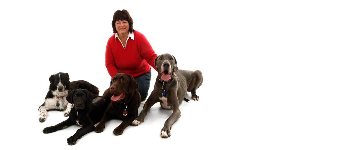 Cours de dressage pour chien | ABC du chien